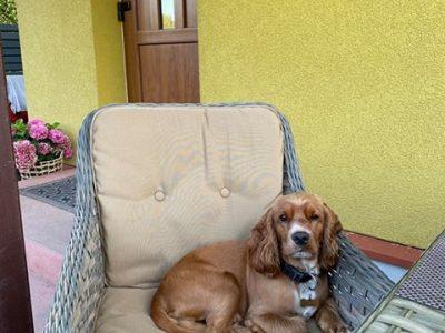 lauko fotelis