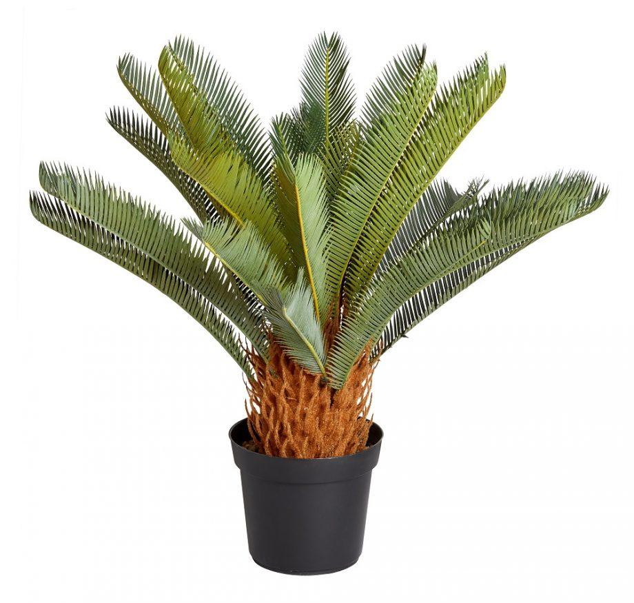 Sago palmė